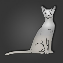 ABYSSINIAN STYLE 11